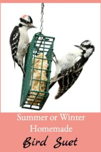 Summer or Winter Homemade Bird Suet