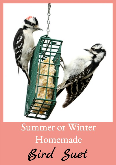 Here's an easy recipe for homemade suet that can me made and put out in either summer or winter - it holds up even in the heat.