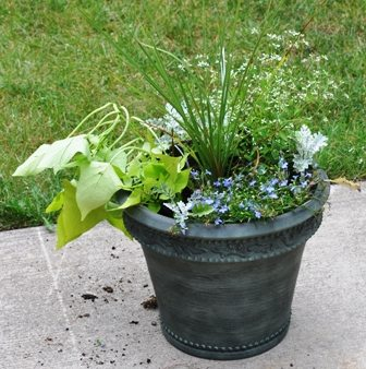 container planted