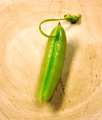 Stringing A Sugar Snap Pea