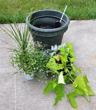 starting container planting