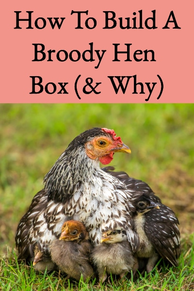 building a broody hen box