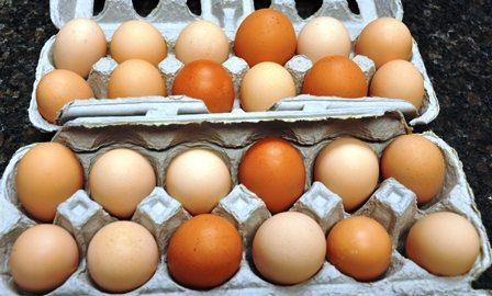 Storing Eggs for Hatching