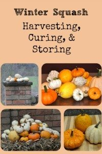 Winter Squash: Harvesting, Curing, and Storing