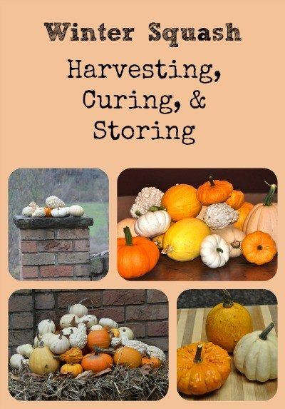 Winter Squash: Harvesting, Storing, and Curing Collage