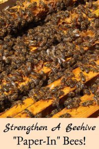 Paper-In Bees to Strengthen A Beehive