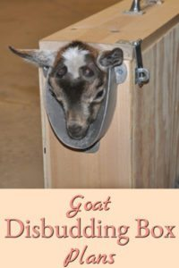 Goat Disbudding Box Plans
