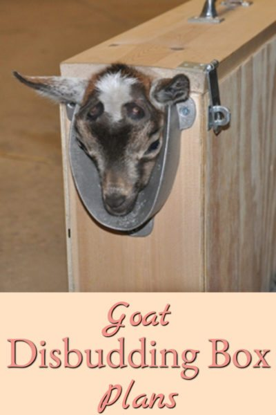 Here are plans for building your own goat disbudding box