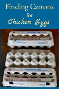 Finding Chicken Egg Cartons