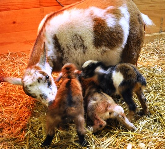 Jewel 2nd Triplets