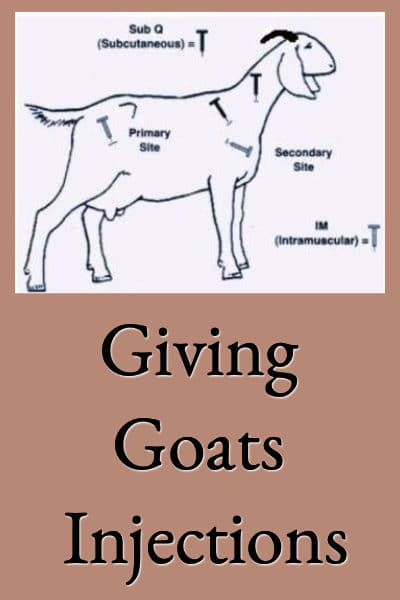 Giving Goats Injections