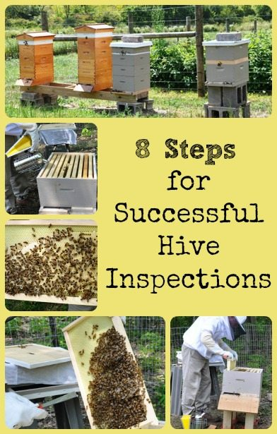 hive inspection tips via Better Hens and Gardens