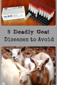5 Fatal Goat Diseases To Avoid