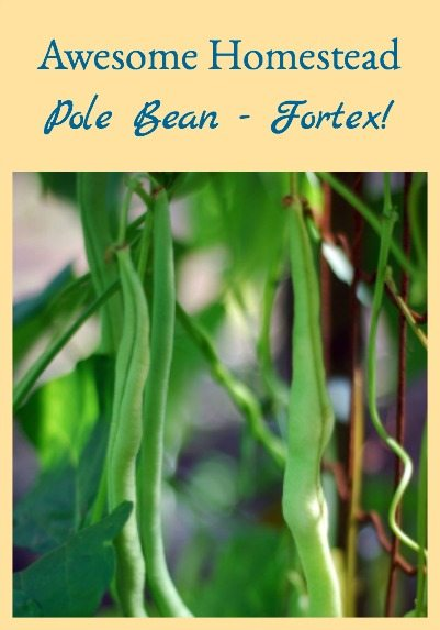 Awesome Pole Bean