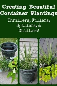 Creating Beautiful Container Plantings (thrillers, fillers, & spillers)