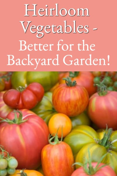 heirloom vegetables - better for the backyard garden