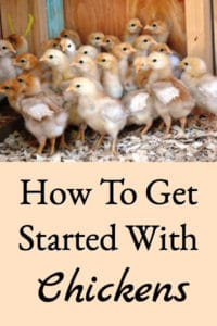 Getting Started With Chickens