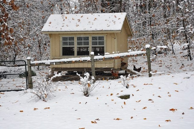 First 2014 Snow Chicken Coop via Better Hens and Gardens