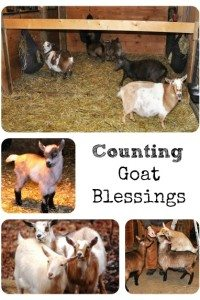 Counting Goat (or Livestock) Blessings