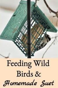 Feeding Wild Birds & Homemade Suet