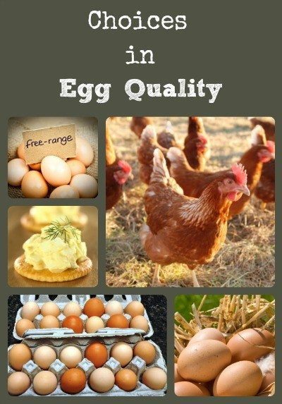 Choices in Egg Quality via Better Hens and Gardens