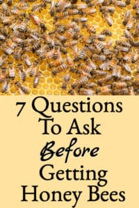 7 Important Questions To Ask Before Getting Honey Bees