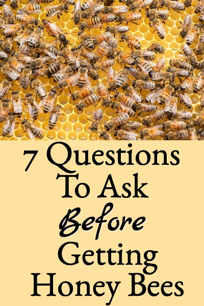 Beginning Beekeeping Important Questions