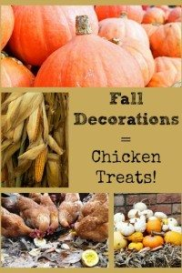 Fall Decorations Equal Chicken Treats