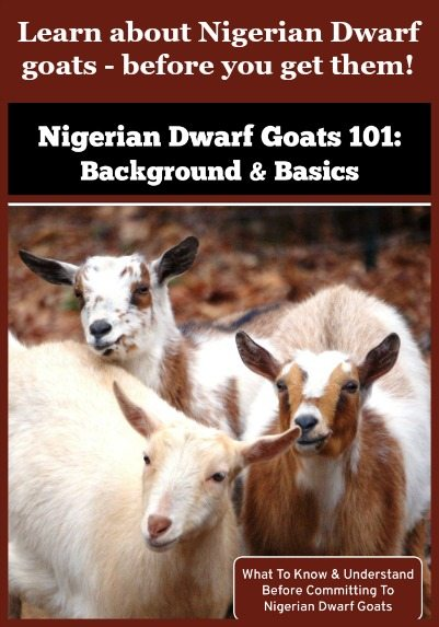 Nigerian Dwarf Goats 101: Background & Basics - What To Know & Understand Before Committing To Nigerian Dwarf Goats