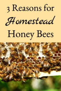 3 Reasons For Homestead Honey Bees