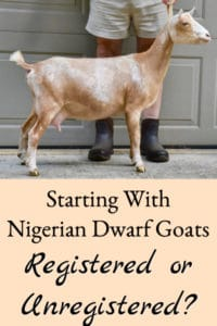 Nigerian Dwarf Goats – Registered or Unregistered?