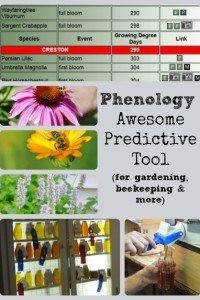 Awesome Predictive Tool – Phenology