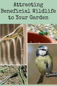 Attracting Beneficial Wildlife to Your Garden