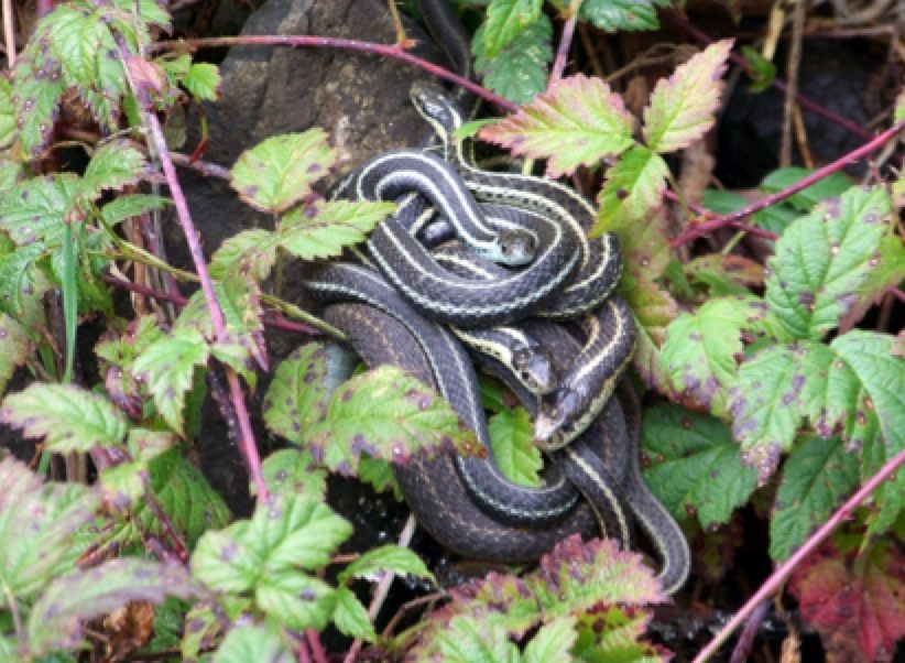 Attracting Wildlife Snakes