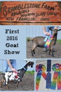 First 2016 Goat Show