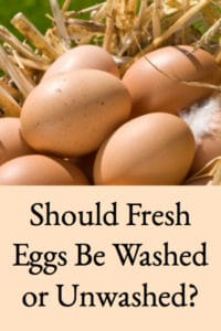 Fresh Eggs – Washed or Unwashed?