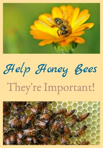 It's important that we help honey bees because they are extremely important in successfully producing the food we eat.