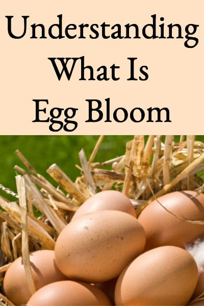 What Is Egg Bloom