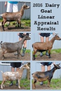 2016 Goat Linear Appraisal Results