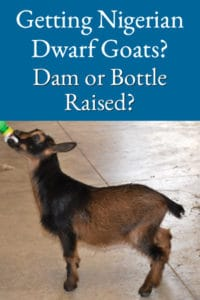 dam or bottle raised