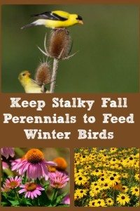 Keep Stalky Fall Perennials To Feed Birds