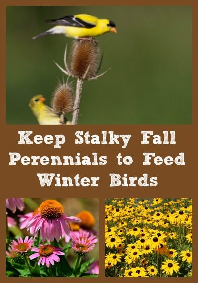 keep-stalky-fall-perennials
