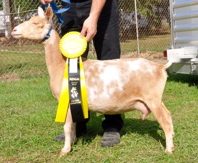 Sun Tea Grand Champion Ashland