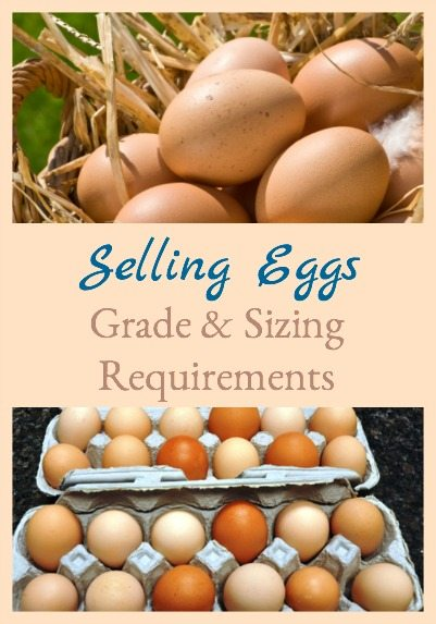Selling Eggs - Grade & Sizing