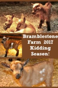 Bramblestone Kidding Season Is Here!