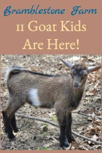 The Goat Kids Are Here!