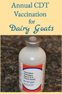 Annual CDT Vaccination for Goats