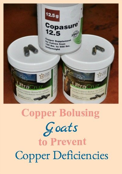 How to use copper bolusing to prevent copper deficiencies in goats
