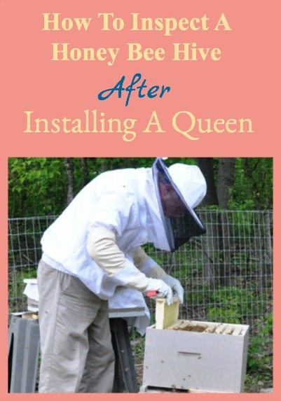 Hive Inspection After ReQueening