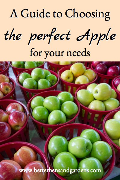 which apples